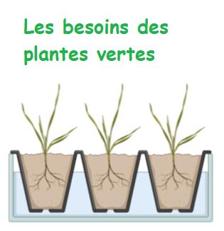 besoins des lantes vertes